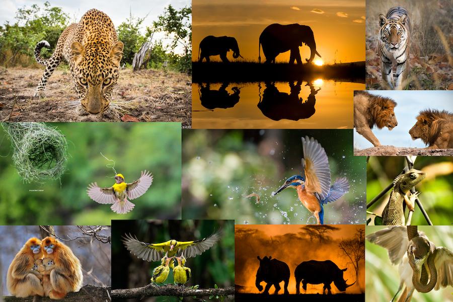 7 wild life